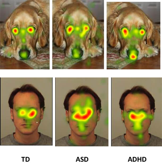 Eye tracking heatmap diagram